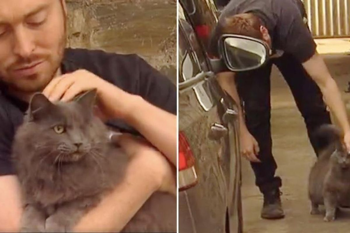 Man Saves One-eyed Stray and the Cat Returns the Favor By Guarding His Home from Burglar...