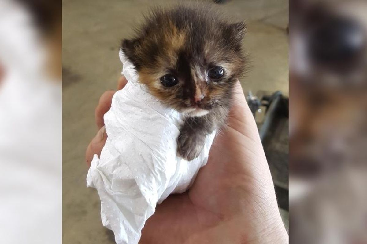 Man Found Tiniest Kitten While Working on a Car and Knew He Had to Help...