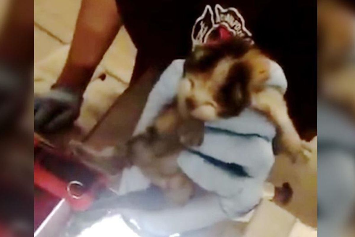 Firefighters Hear Meows From Fire Truck and Find Three Tiny Kittens...