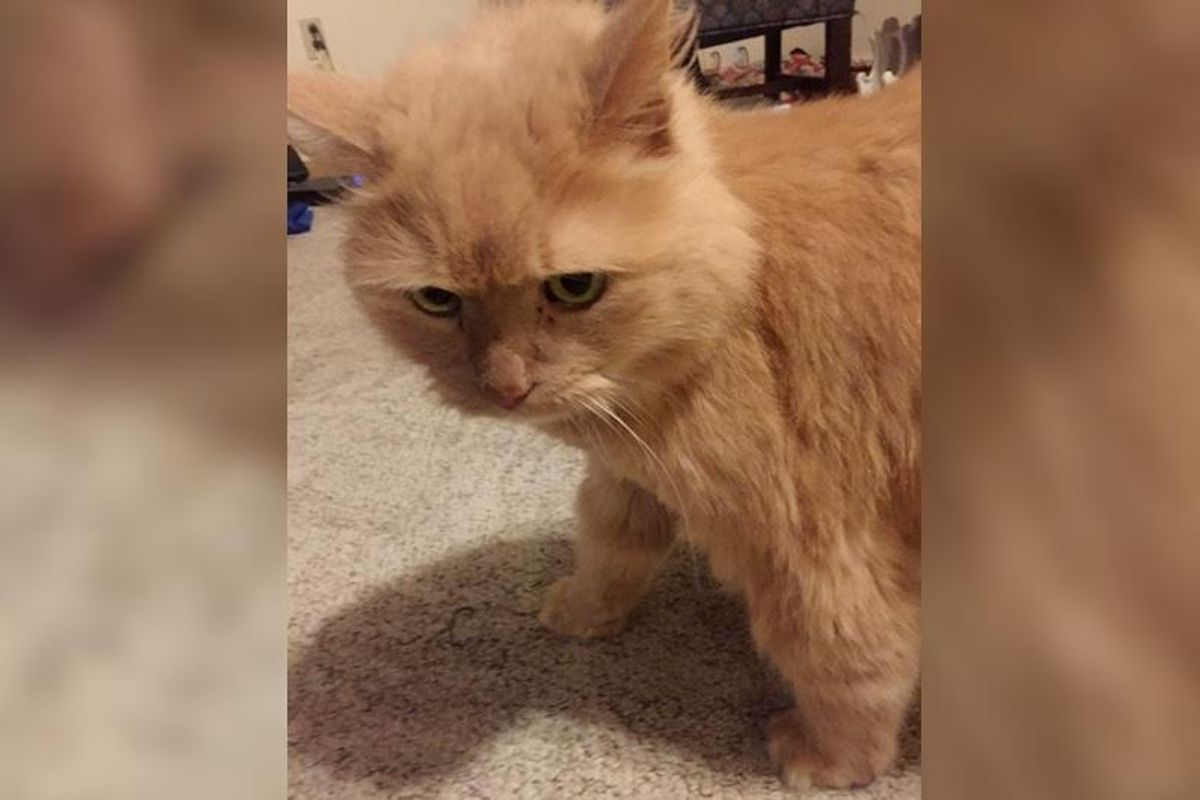 Woman Asks Shelter for Least Adoptable Cat and Finds 16 Year Old Ginger Hiding in Corner, 5 Hours After Adoption.