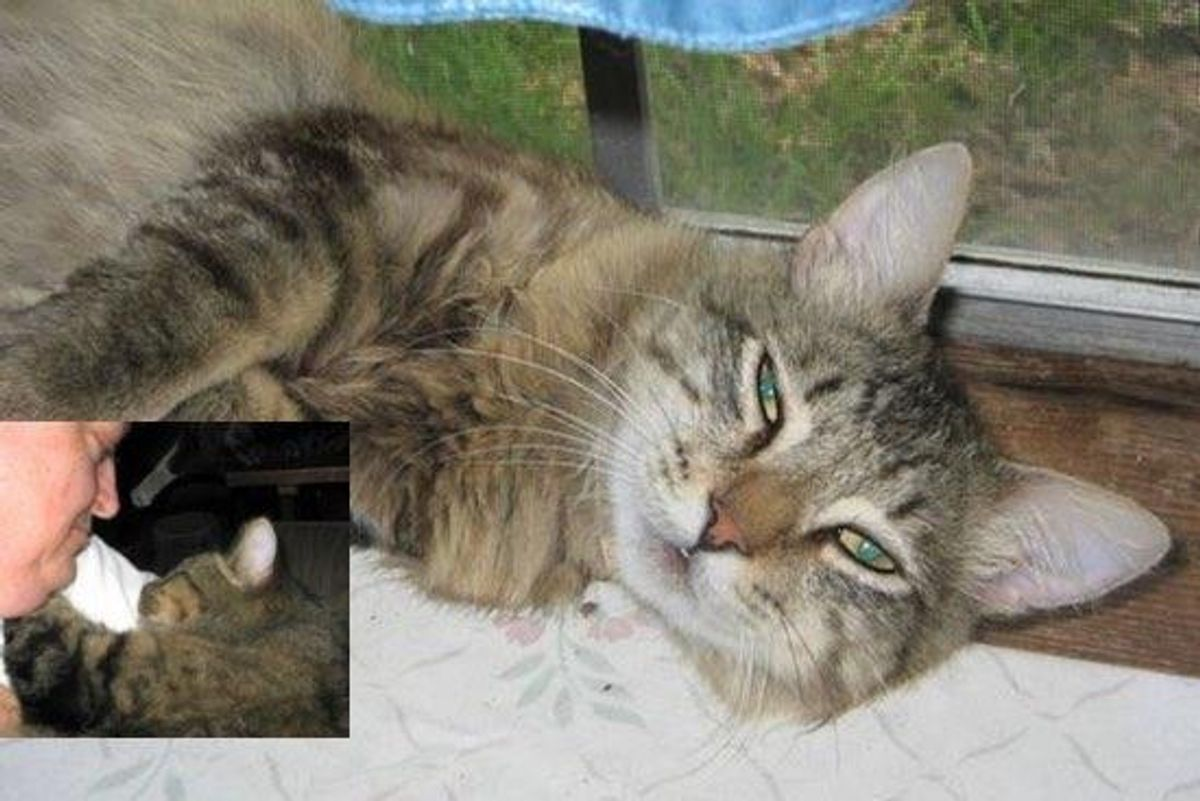 Cat Breaks Out of Shelter to Return to His Rescuer who Cared for Him...