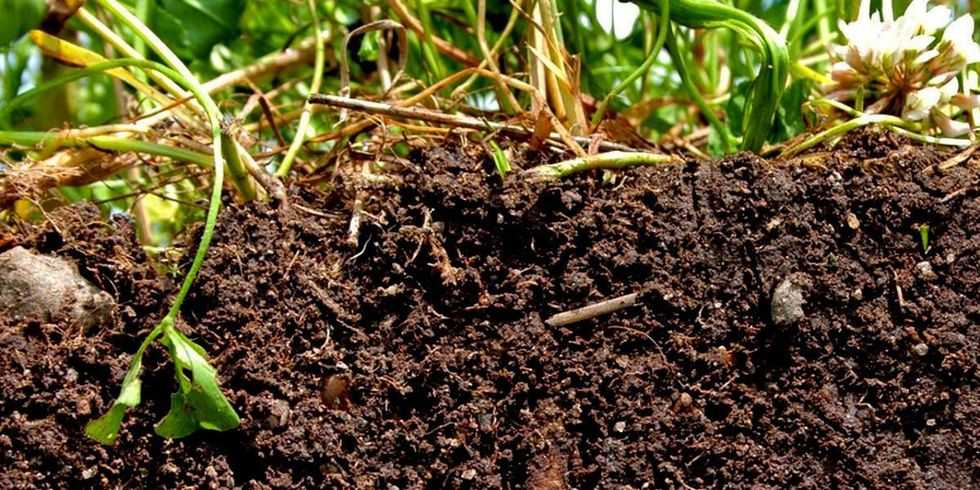 Regenerative Agriculture Can Save the Planet