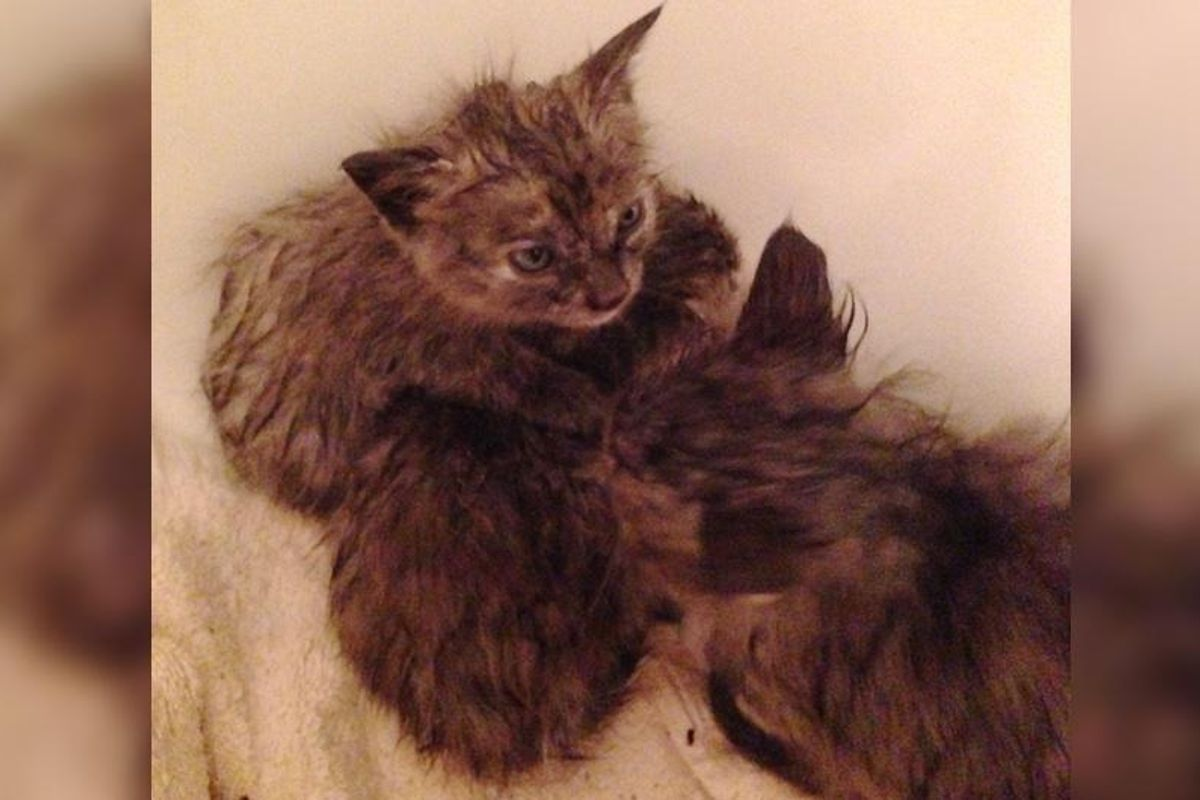 Man Saves Kittens from Drowning in Storm and Goes Back to Find Their Cat Mama...