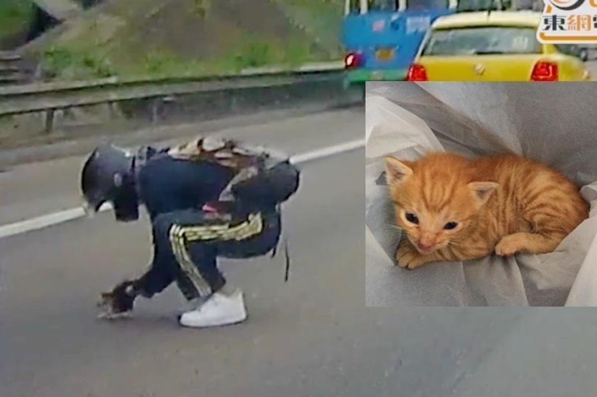 Man Stops Traffic to Save a Tiny Kitten in the Middle of Busy Road.. (with Updates)