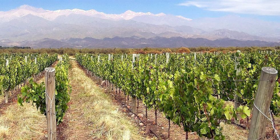 Anything But the Wine! Climate Change Takes Its Toll on Grapes