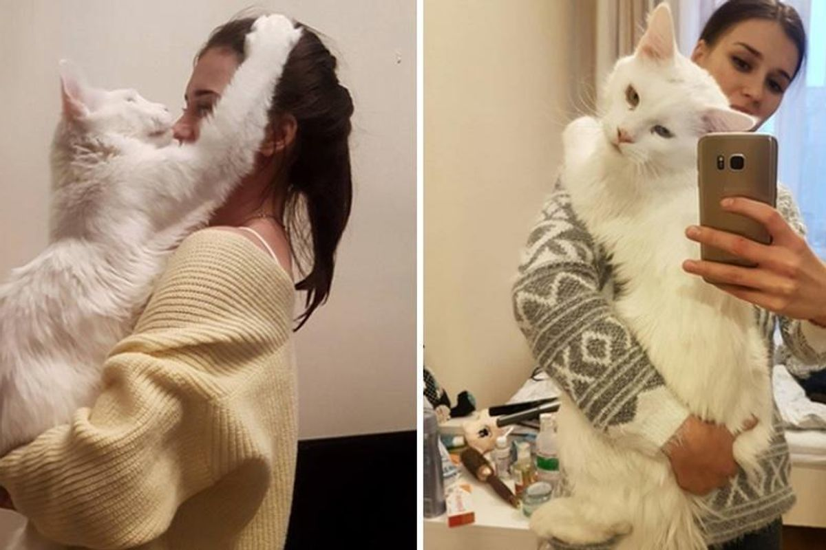 Cuddly Big Kitty Grows Up Hugging His Human Every Chance He Gets