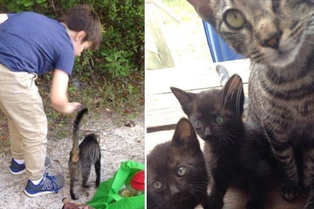Stray Cat Brings Her Babies to Campers who Gave Her Food.. (with updates)