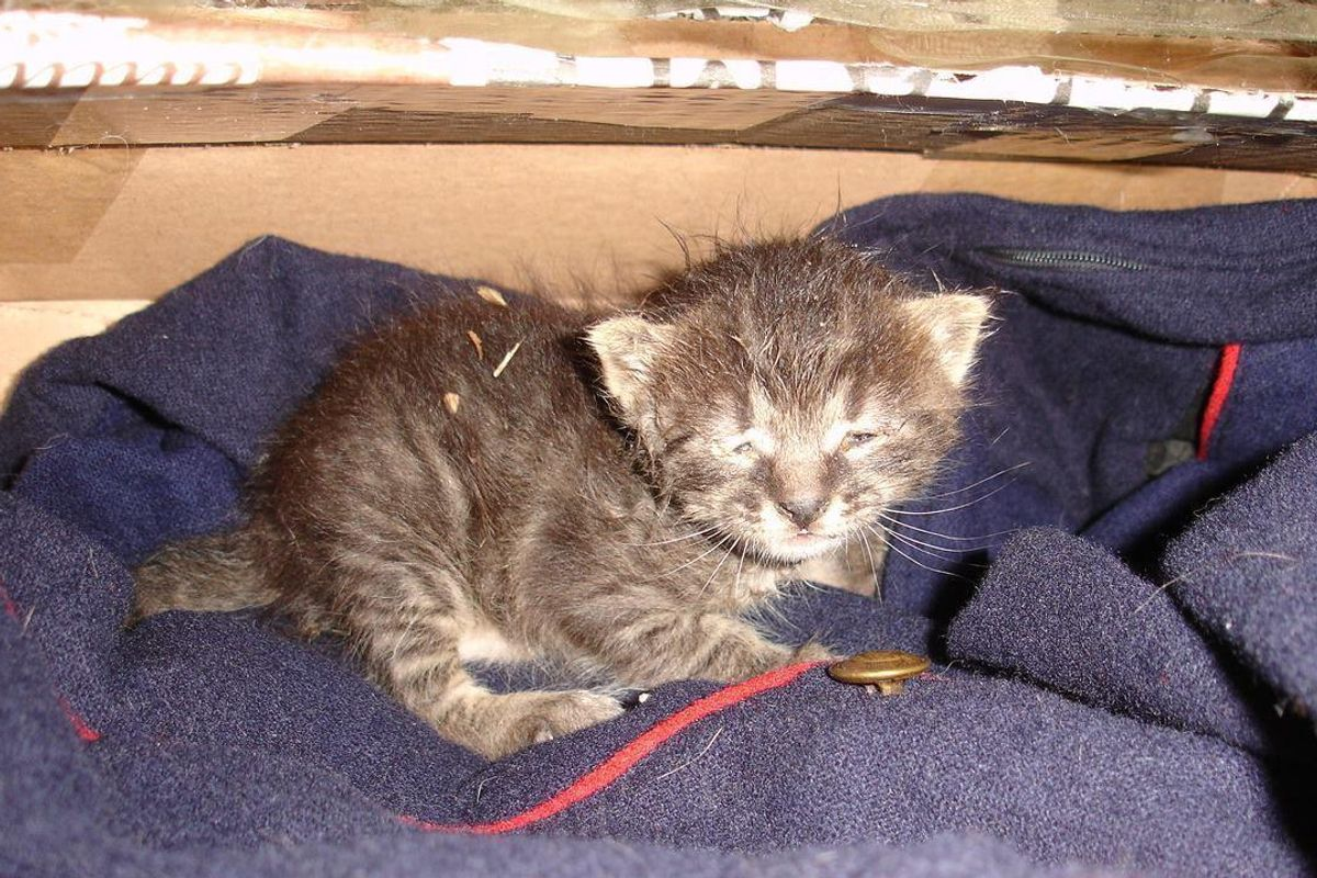 Woman Saves Half Frozen Kitten and Brings Her Back to Life, What a Difference a Few Days Make...