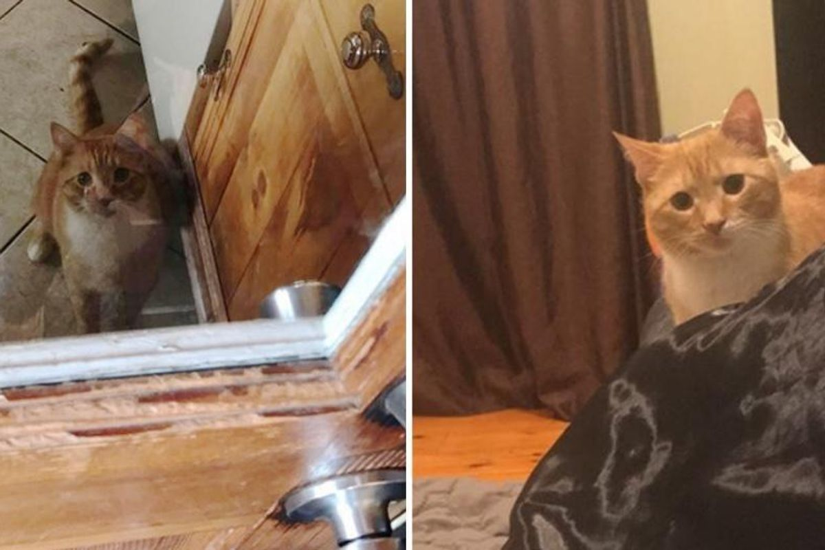 Cat Won't Stop Staring At His Human Mom Who Gave Him a Forever Home.. (More photos)
