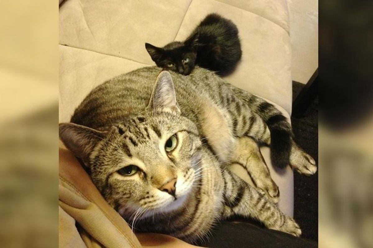 Cat Shows Stray Kitten the Same Love He Received When He was Rescued 3 Years Ago...