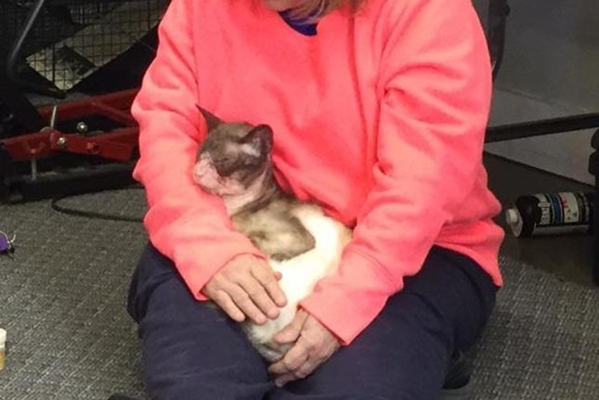 Woman Takes a Chance on a 'Forgotten' Siamese and Brings Back His Glorious Self...