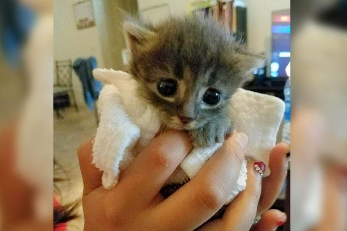 Tiny Orphaned Kitten Wouldn't Stop Purring After He was Saved from Near Death...