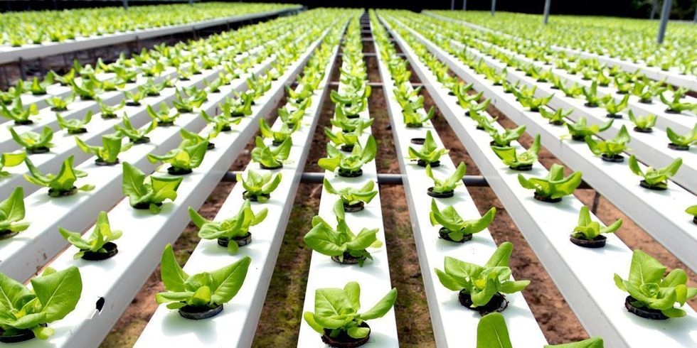 Should Hydroponic Farming Be Eligible for Organic Certification?