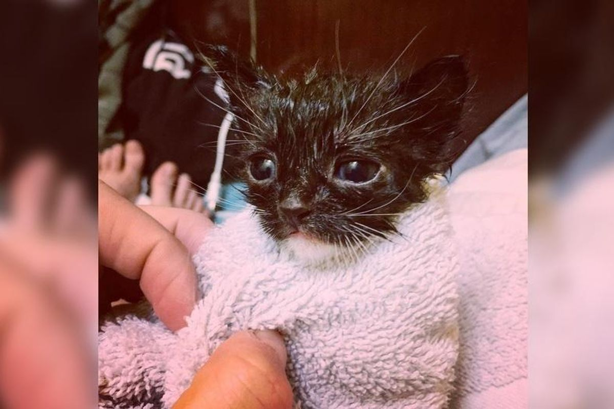 Couple Saves Motherless Kitten From a Field, What a Difference One Day Can Make...