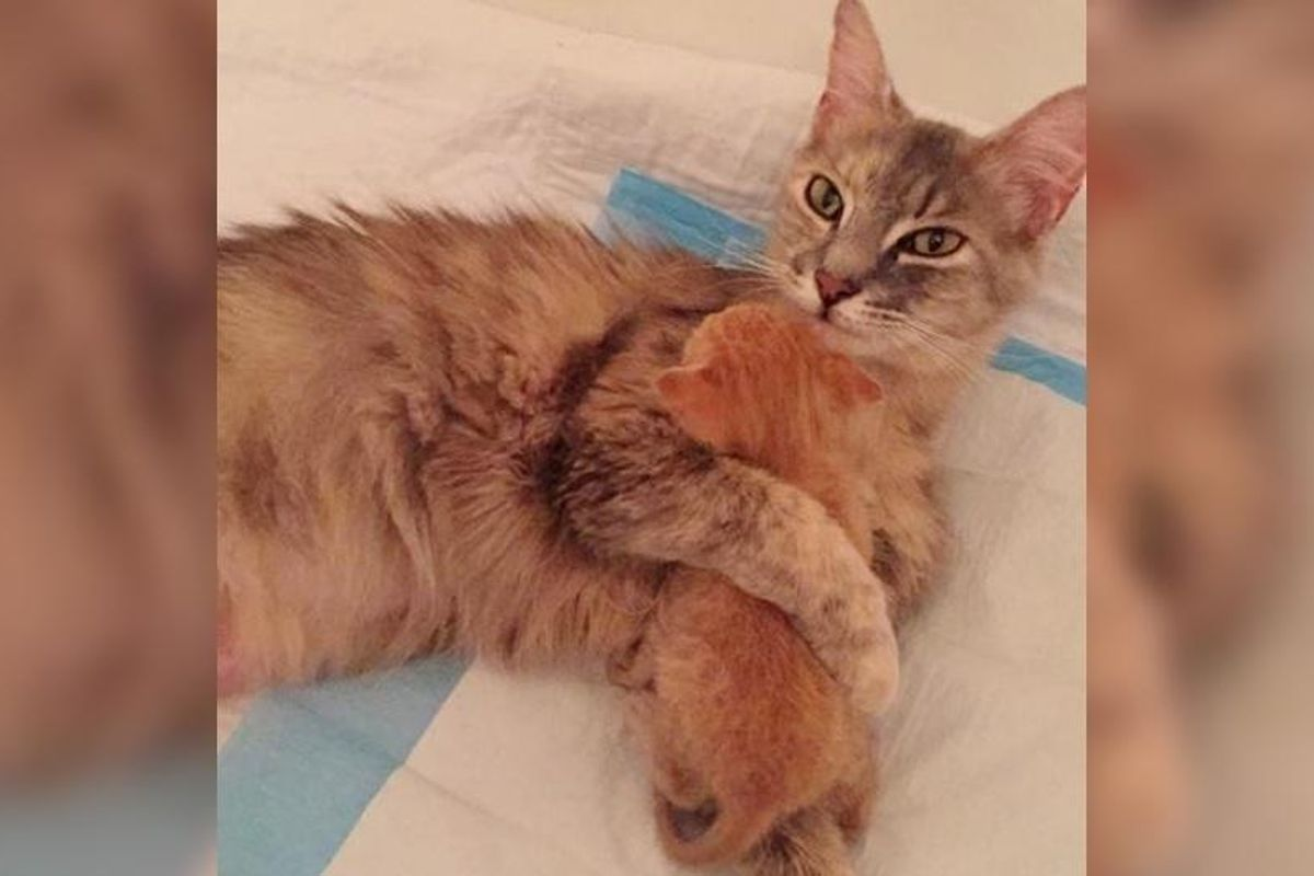 Heartbroken Cat Finds Happiness When She Becomes Mom to Orphaned Kitten In Need of Love...