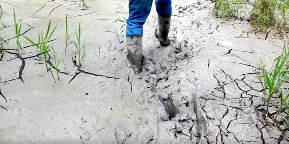 Feds Halt New Drilling on Rover Pipeline After Massive Spills Destroy Ohio Wetlands