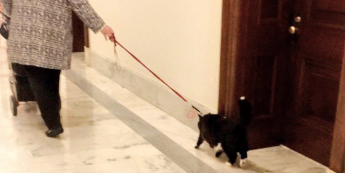 A Nameless Hero Walked a Cat On a Leash In the Senate Building