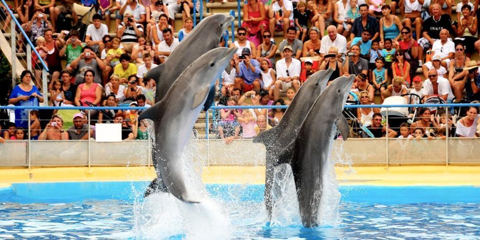 France Bans Captive Breeding of Dolphins and Whales While SeaWorld Still Invests in It
