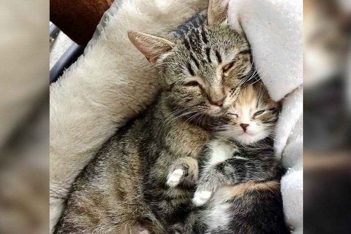Stray Cat Mom Brings Her Single Kitten to Man Who Saved Her Life...