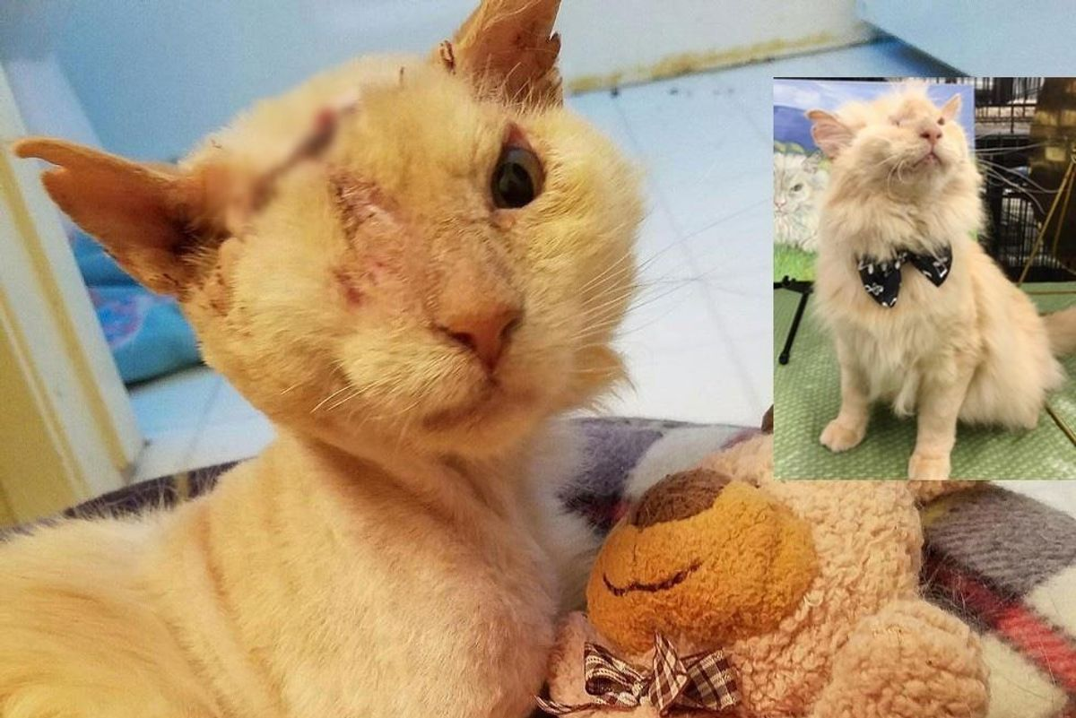 His Friendliness Almost Cost Him His Life, But This Cat Continues to Love and Trust.. (with Updates)