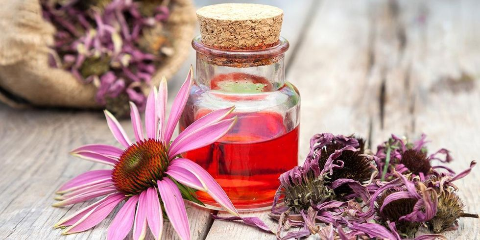What Are the Health Benefits of Echinacea?