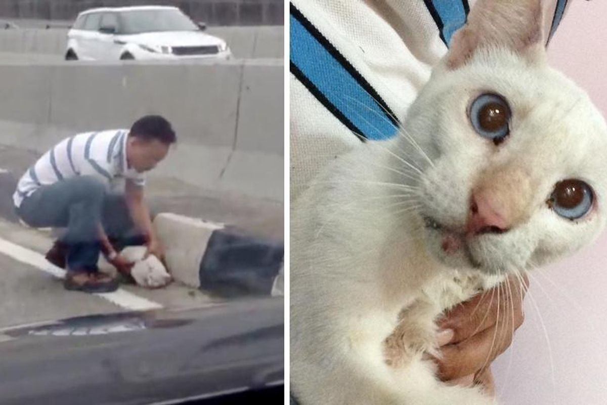 Man Saves Stray Cat Cowering In the Middle of Busy Highway...