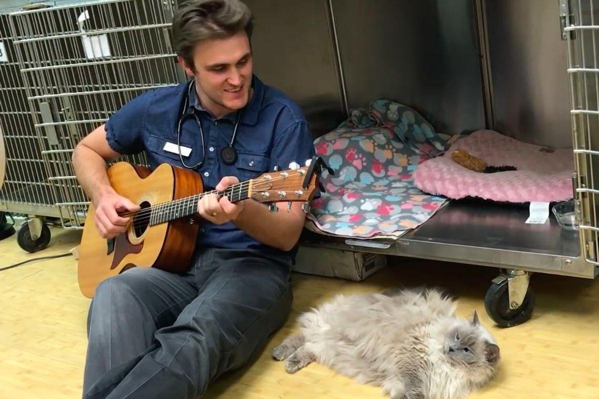 Vet Serenades Cat Patient to Comfort Her With Beautiful Song...