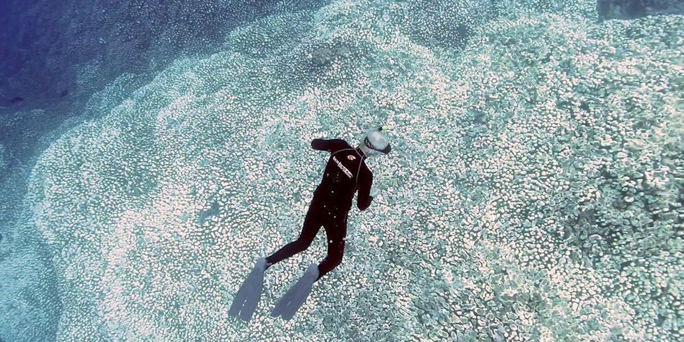 Coral Reefs Could All Die Off by 2050