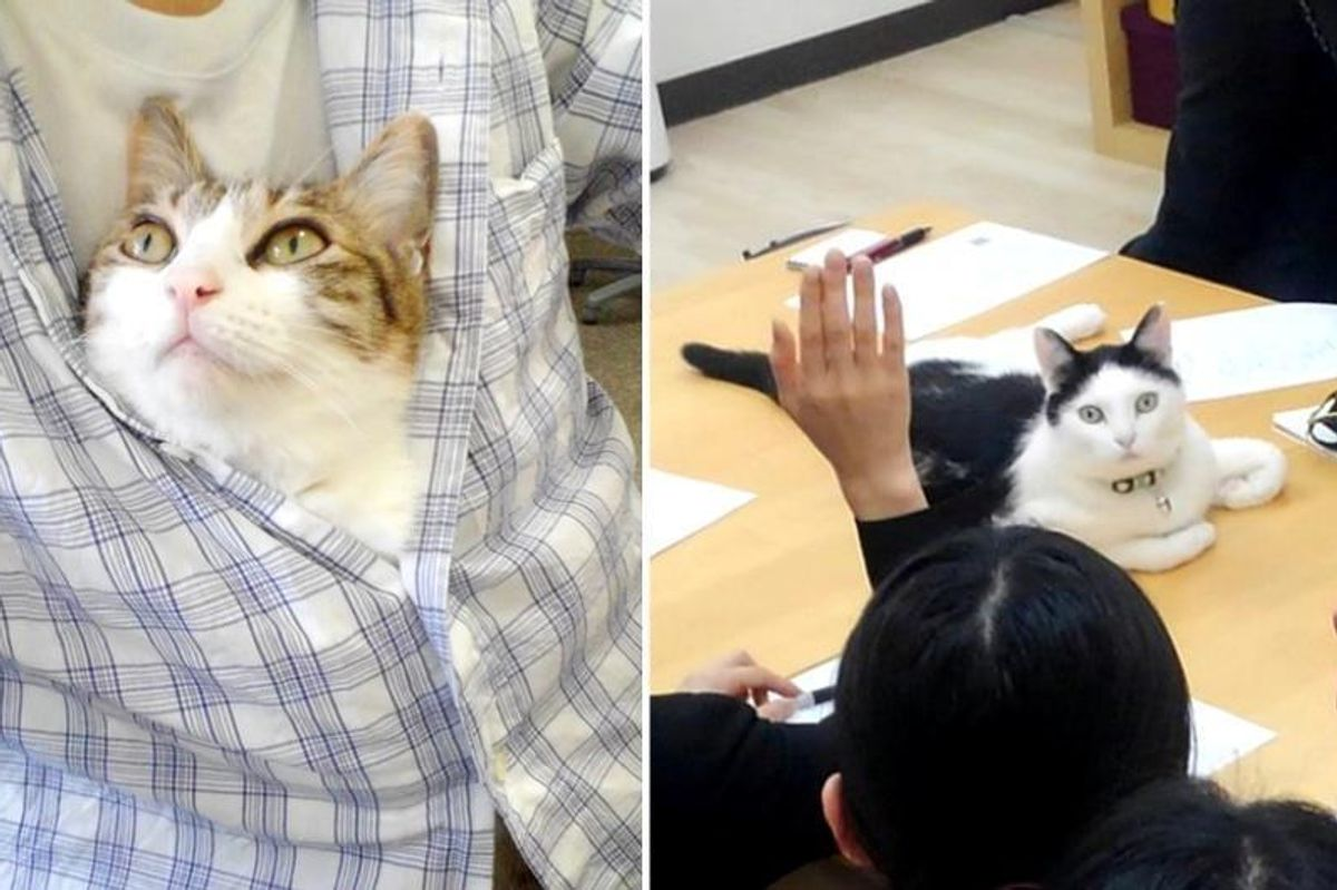 This Company Pays Their Employees for Every Cat They Rescue...