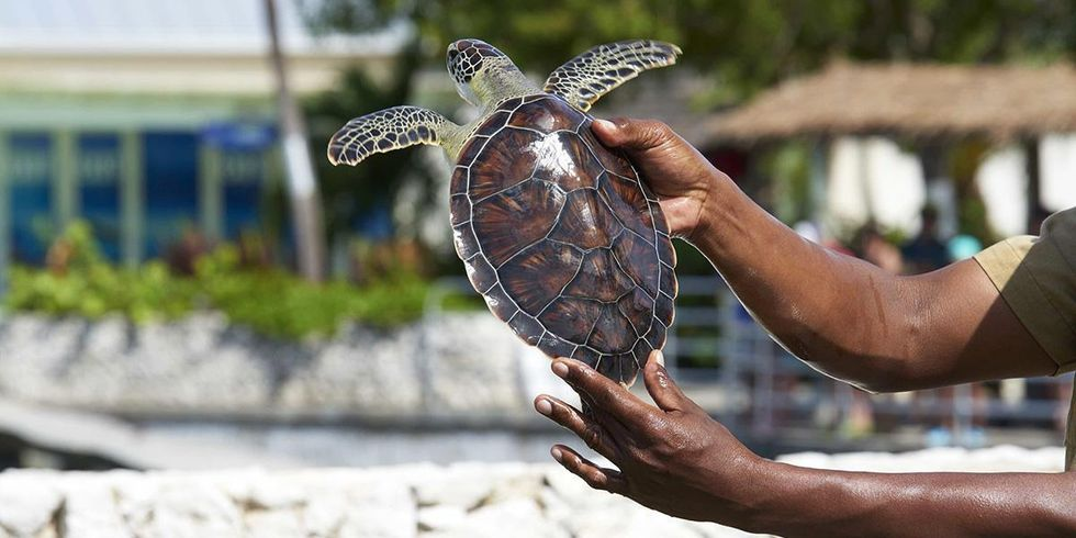 World's Largest Travel Website Stops Selling Tickets to Cayman Turtle Centre
