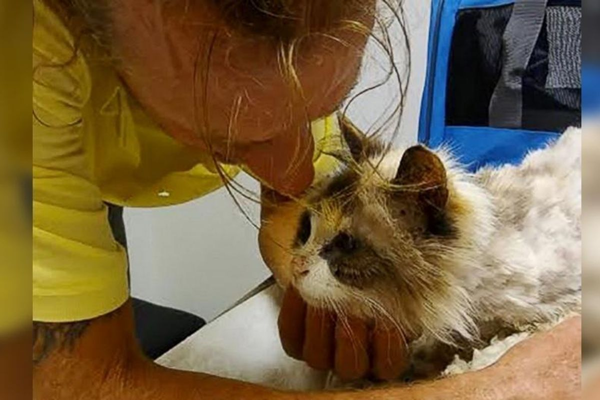 Man Burst Into Tears When He Found His 20-year-old Beloved Deaf Cat...