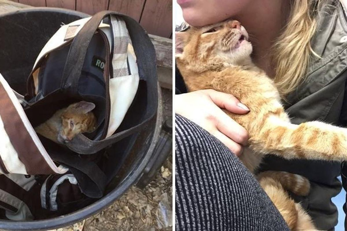 Cat Found in Backpack Can't Stop Thanking His Rescuers After They Saved Him from Near Death...