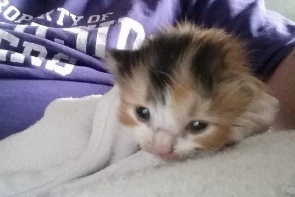 Man Refuses to Give Up Looking for Crying Kitten, After Days of Searching…