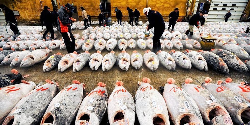 Japan Joins Agreement to Fight Illegal Fishing