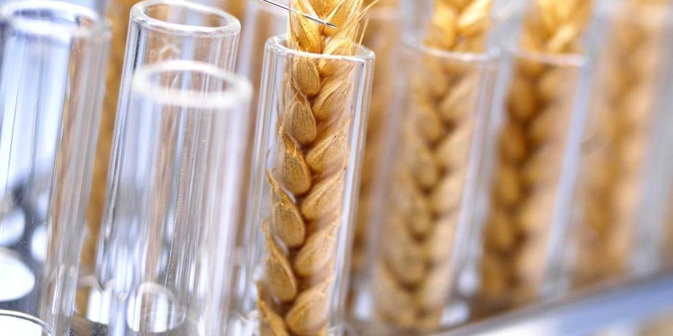 Next Generation of GMOs Escapes Regulation