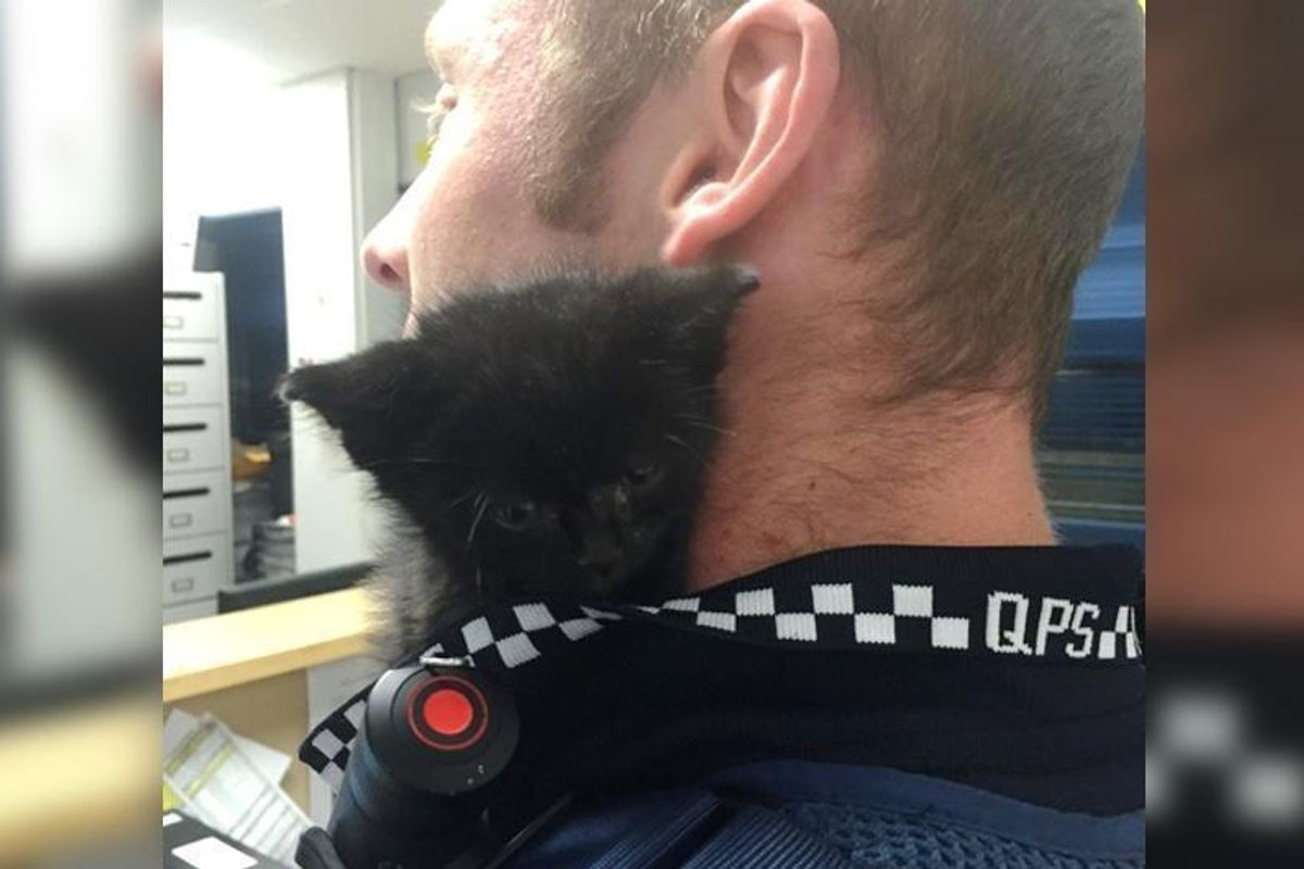 Tiny Kitten Cuddles Up to His Rescuer In the Office and Offers Him Help...