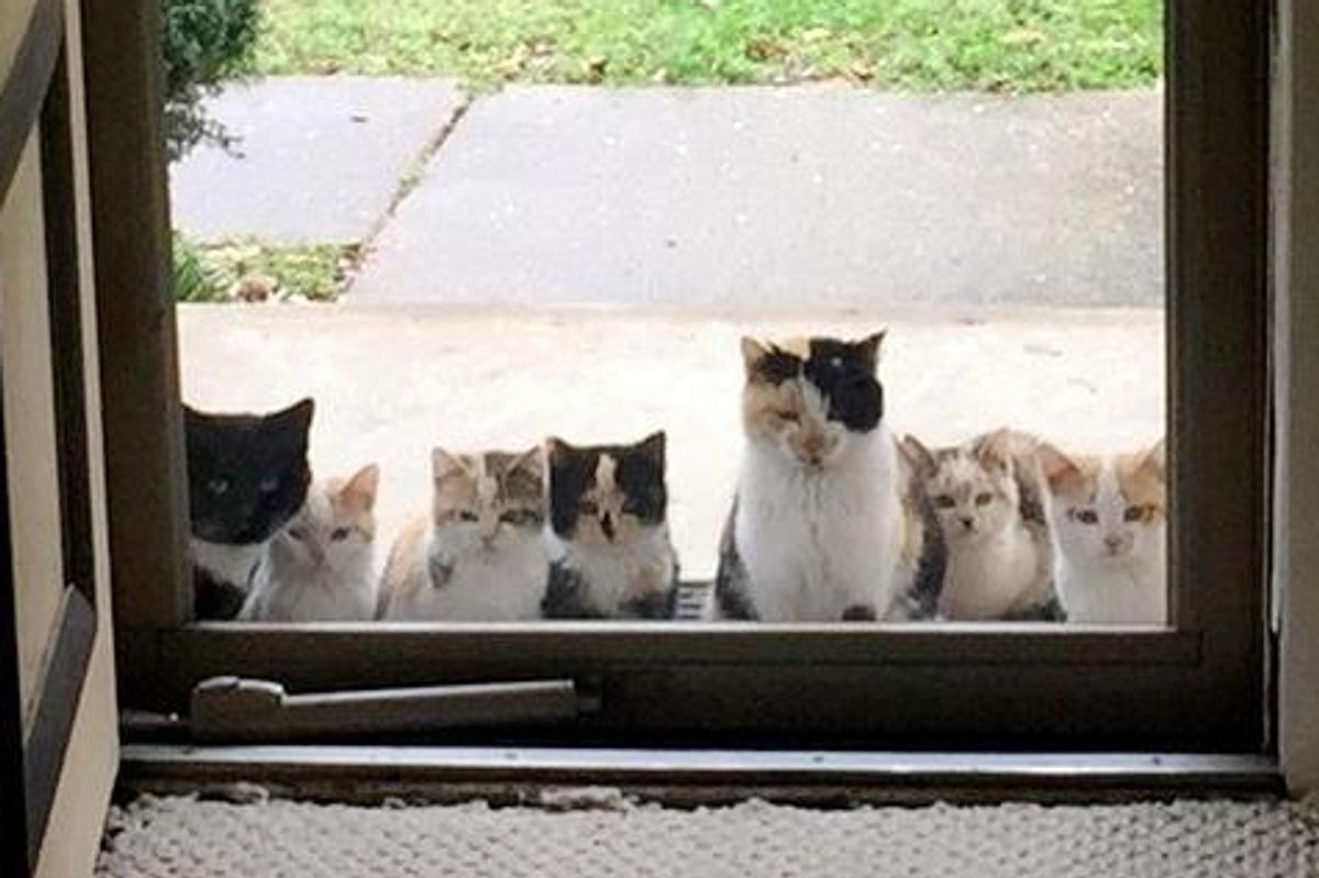 Cat Lovers Give Stray Cats Food, the Kitties Bring Their Fur Family to Their Porch... (More Photos)