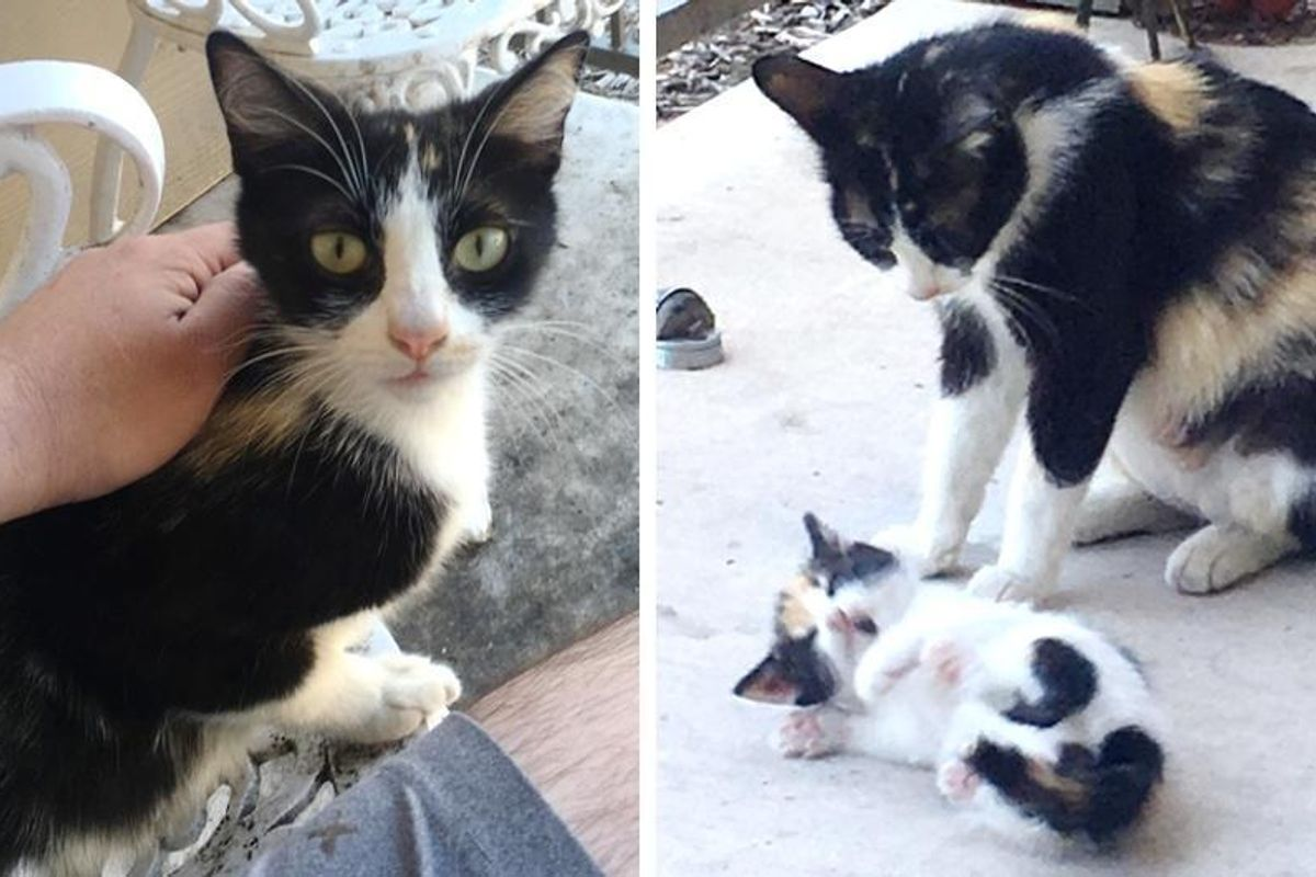 Neighborhood Stray Brings a Tiny Surprise to Man Who was Kind to Her..