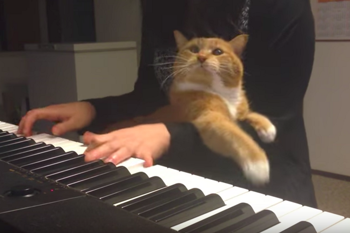 Cat Interrupts Piano Playing