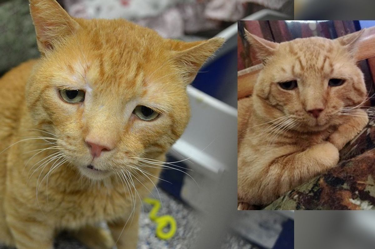 """""""Saddest Cat"""" Finds His Smile After Nine Months of Waiting for His Purrfect Home."""