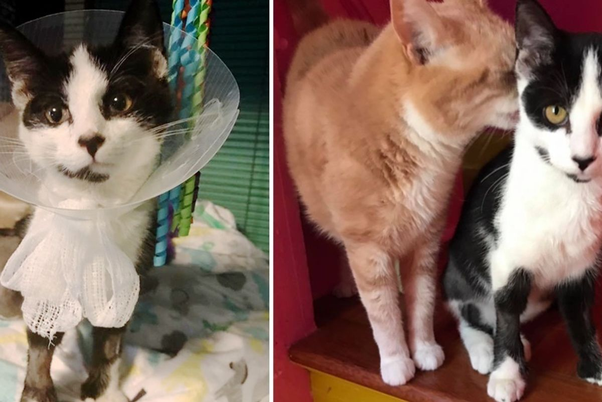 Woman Saves Cat Others Thought Was Too Broken to Do Anything, and Proves Them Wrong...