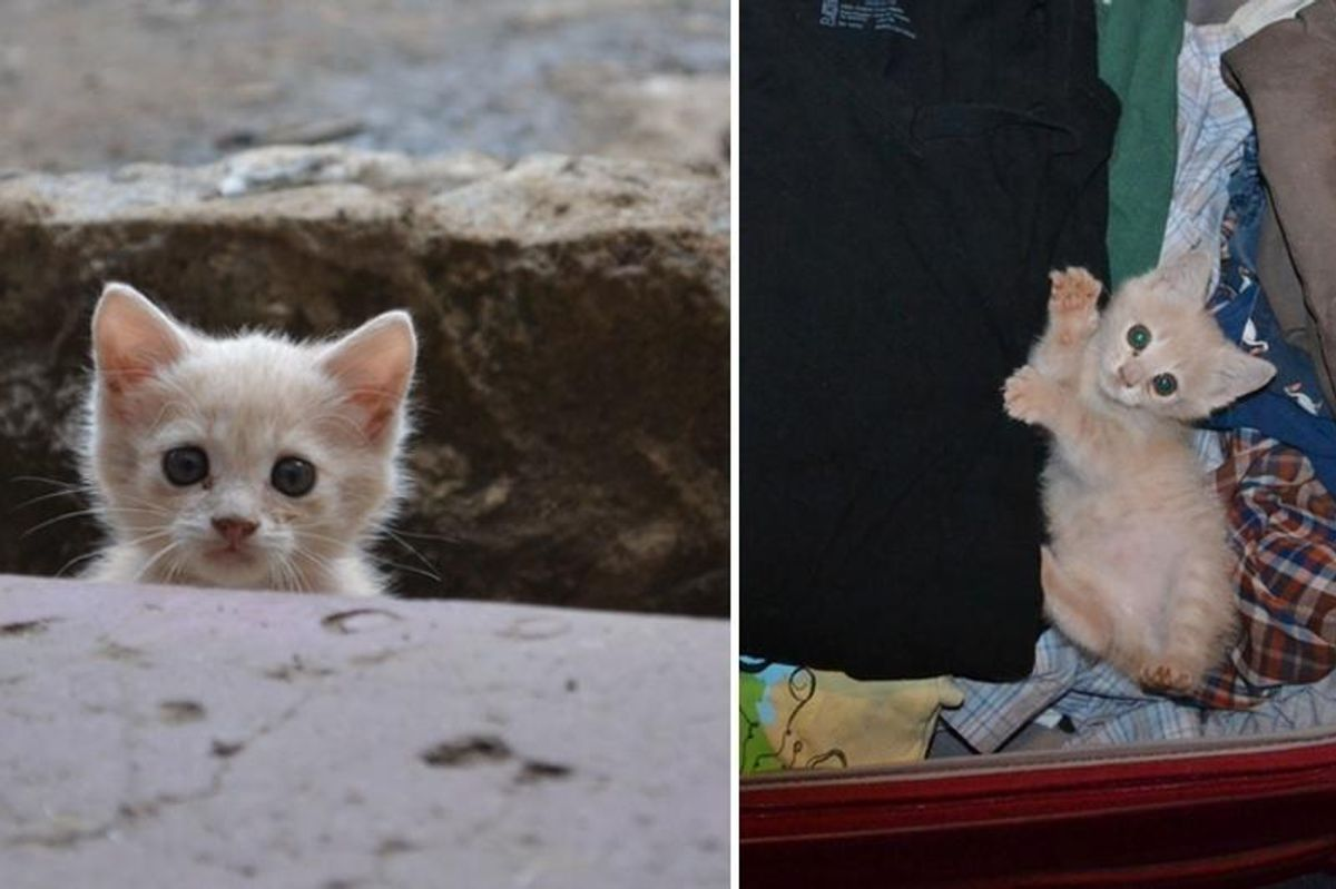 Stray Kitten Follows Man Home and Decides to Stay, Now Four Years Later…