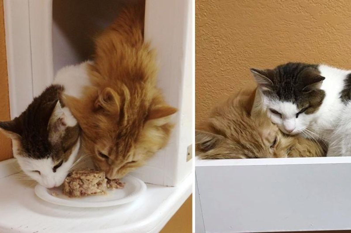 Two Cats Who Lived Rough Lives, Find Each Other at Shelter, Something Beautiful Happens..