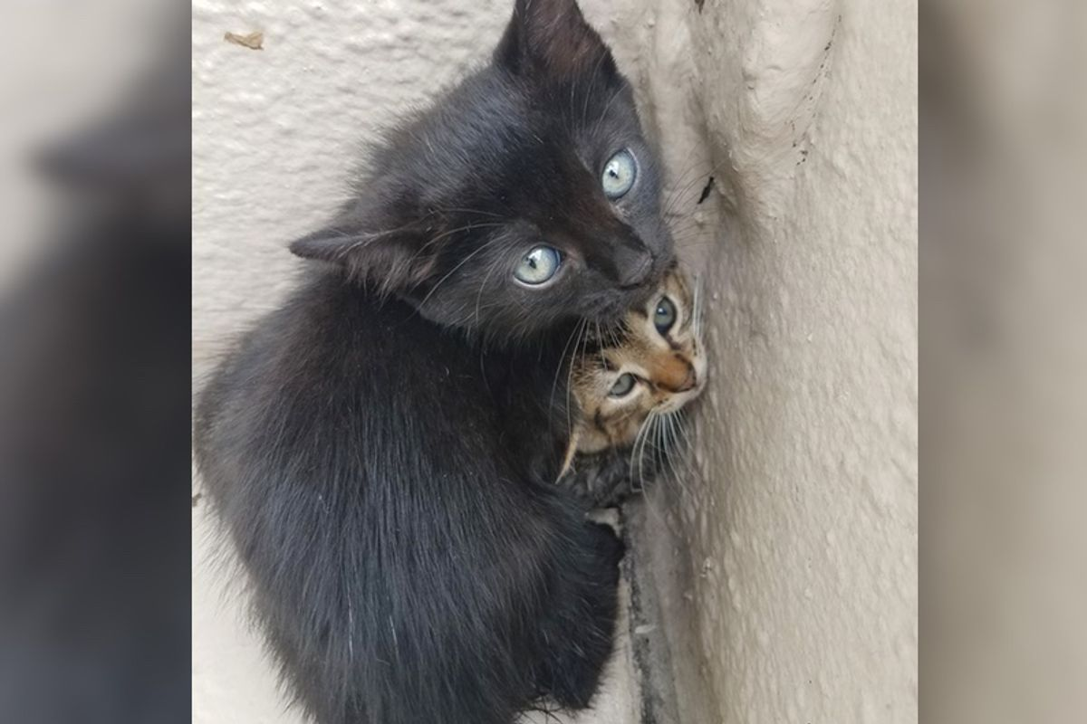 Man Finds Kittens Huddled Up in a Corner and Shows Them Love…