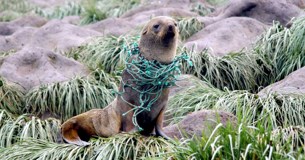Plastic Pollution in Antarctica 5 Times Worse Than Expected