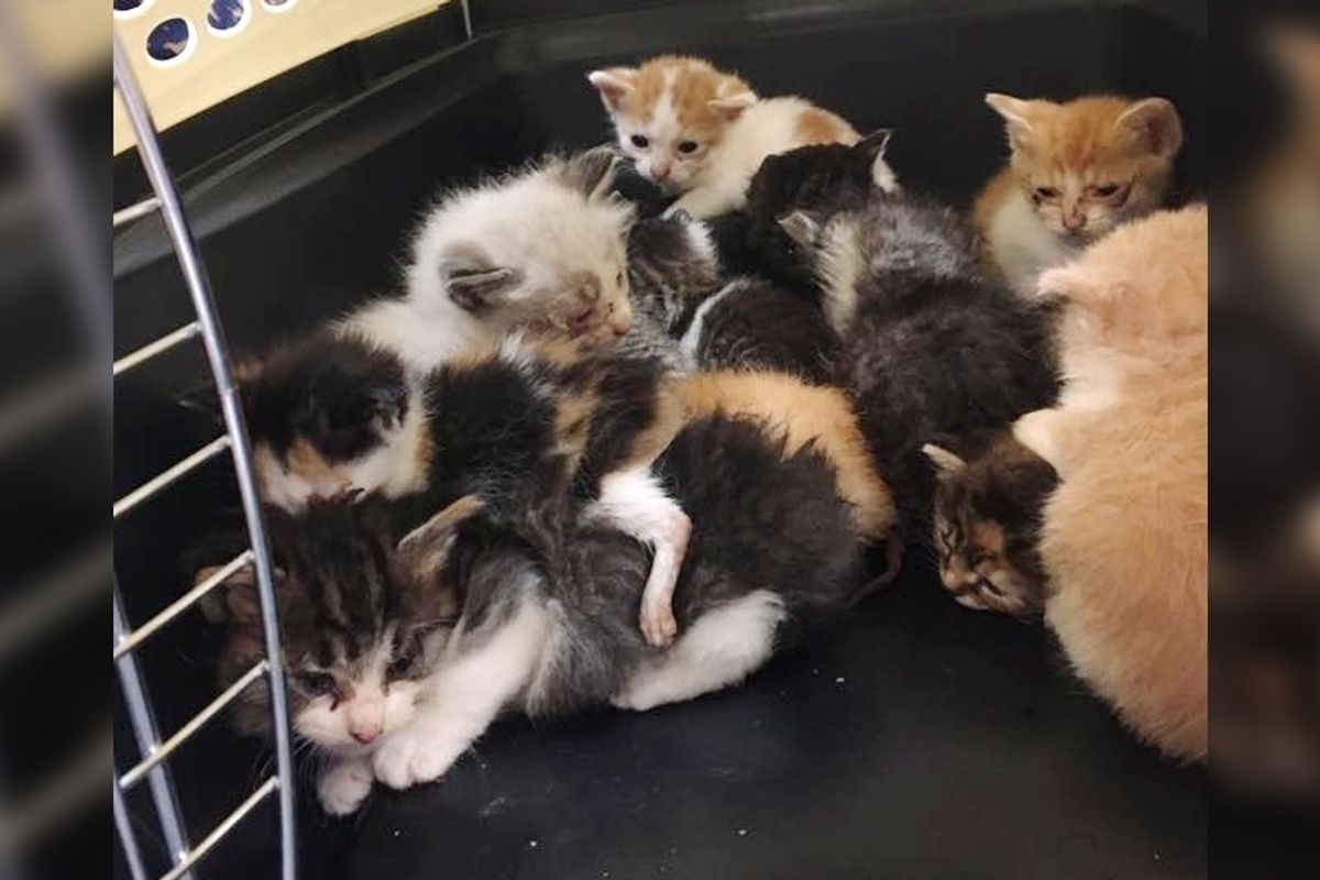 Woman Surprises Rescuers When She Offers to Foster 14 Orphaned Kittens Saved from Yard...