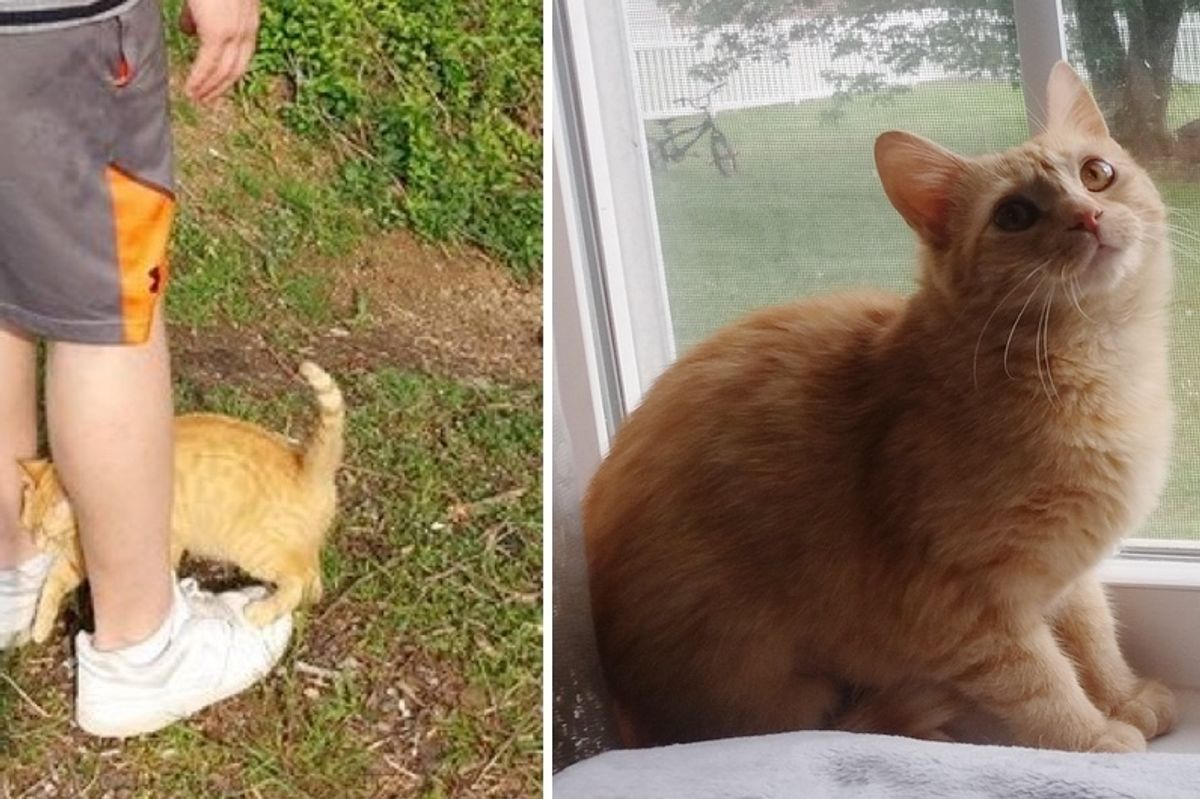 Pregnant Stray Cat Walks Up to Man, Clinging to Him and Asking for Love...