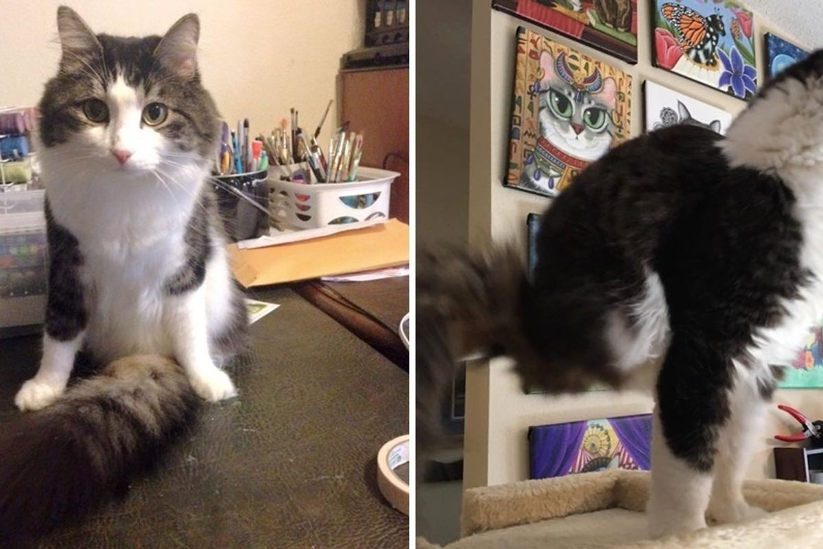 Cat, Who was Born with Two Legs, Uses His Fluffy Tail to Walk and It's Incredible!
