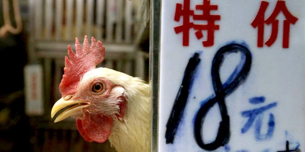 Proposed Rule Would Permit China to Export Poultry Products to U.S.