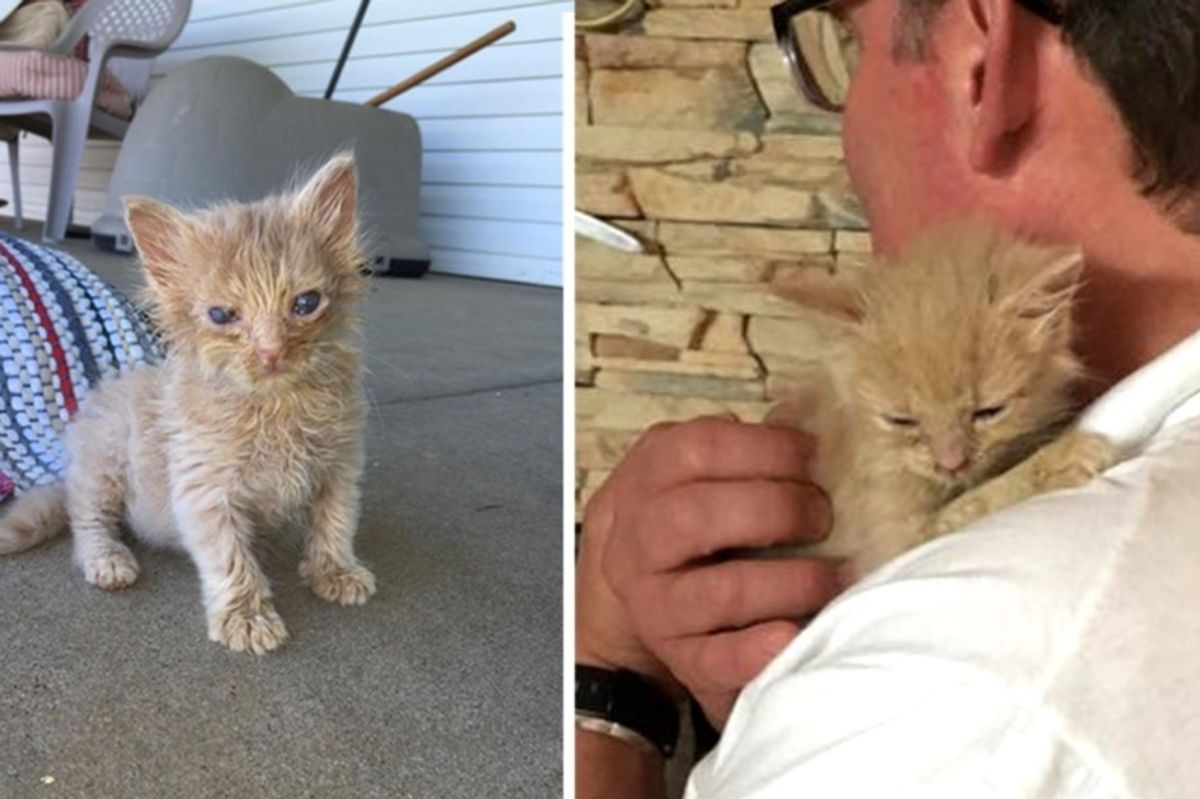 Feral Cat Brings Her Kittens to Man that Fed Her for Help, Now a Year Later...